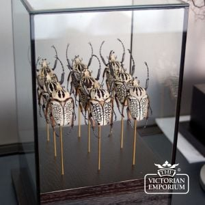 Victorian ornaments - Army of Beetles in Glass Case