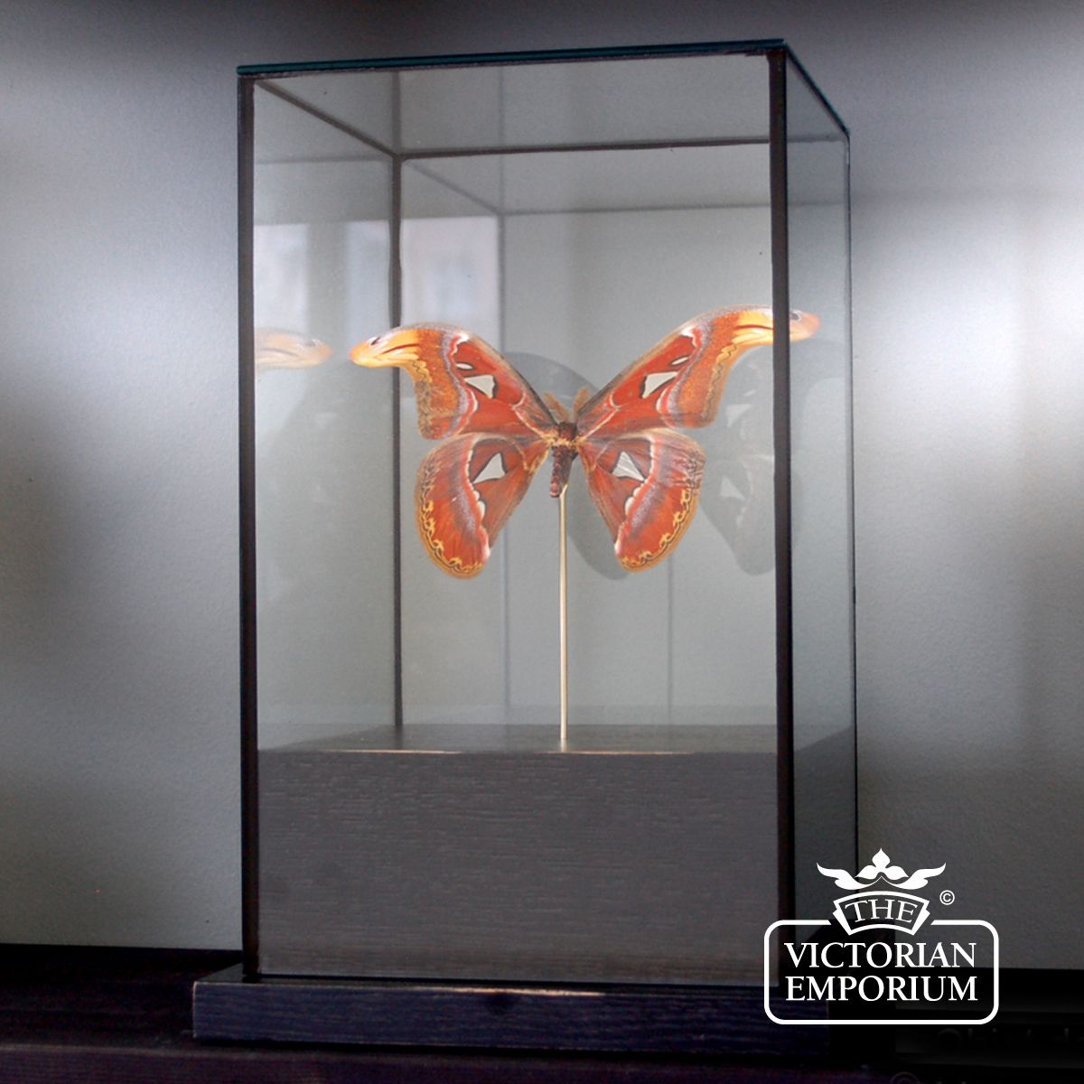 Reproduction victorian wallpaper guide the victorian emporium - Butterfly In Square Glass Case