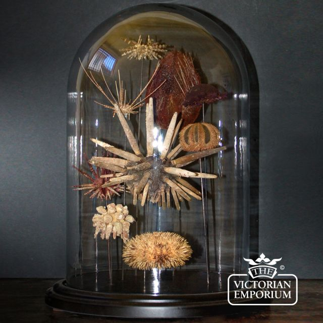 Sea urchin display in glass globe