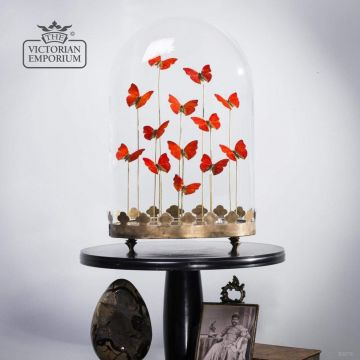 Red Butterflies in a Domed Display Case