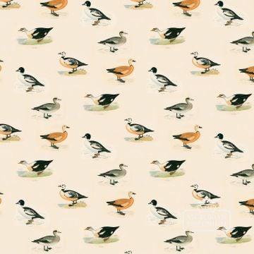 Goldeneye wallpaper featuring Duck Breeds